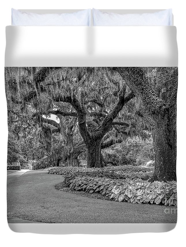 Scenic Duvet Cover featuring the photograph Southern Oaks In Black And White by Kathy Baccari
