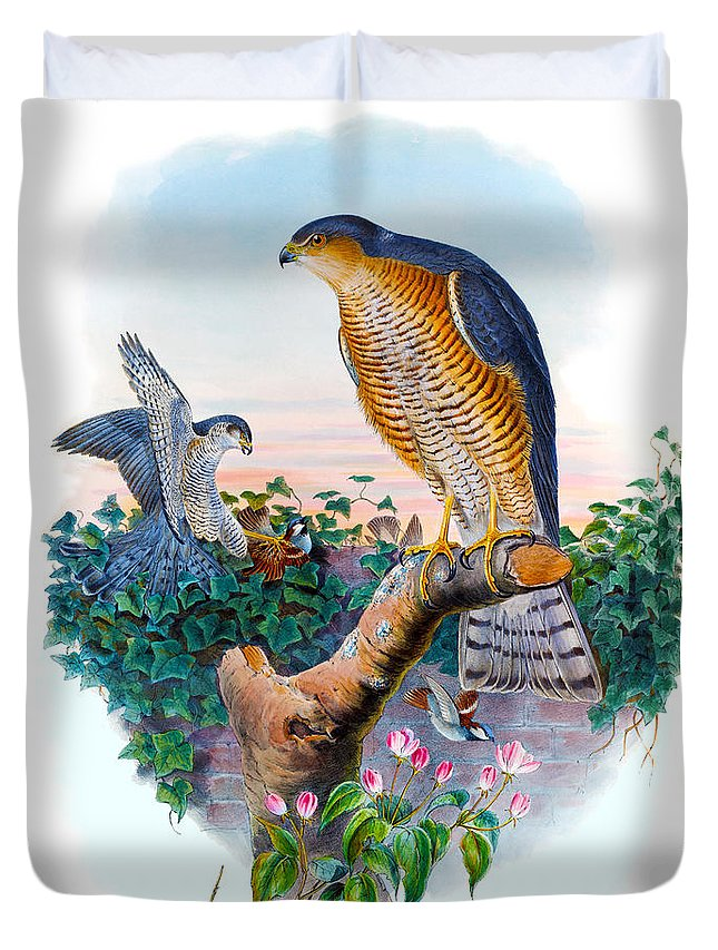 Sparrow Hawk Duvet Cover featuring the painting Sparrow Hawk Antique Bird Print Joseph Wolf Birds Of Great Britain by Orchard Arts