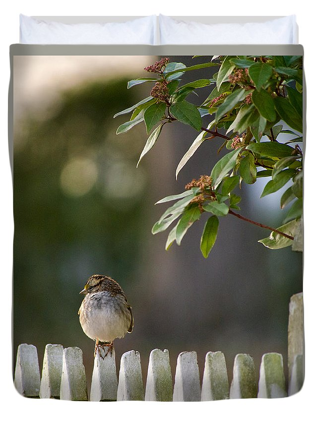 Sparrow Duvet Cover featuring the photograph Sparrow In Colonial Williamsburg by Rachel Morrison