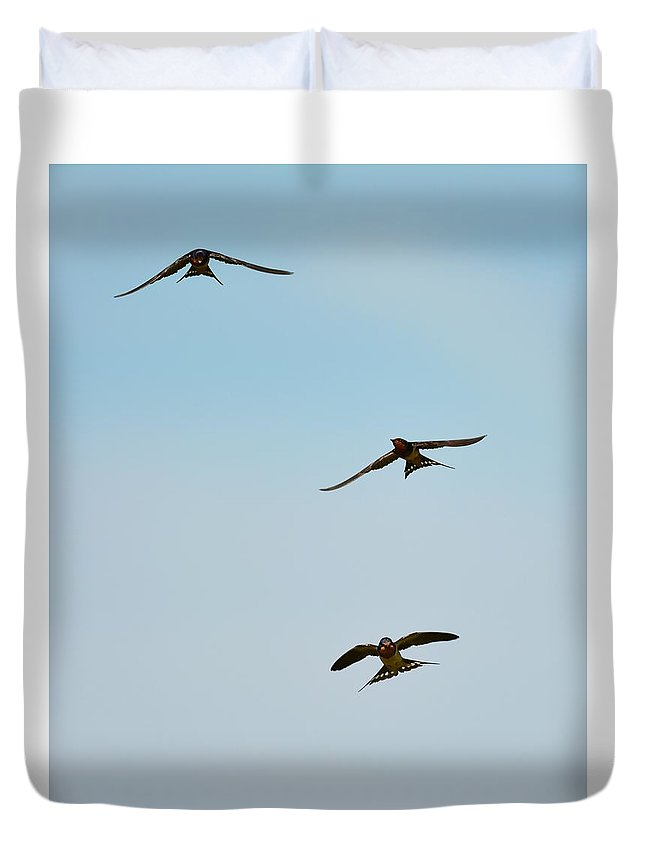 Sparrows Duvet Cover featuring the photograph Swallows In Flight by Jo-Ann Matthews