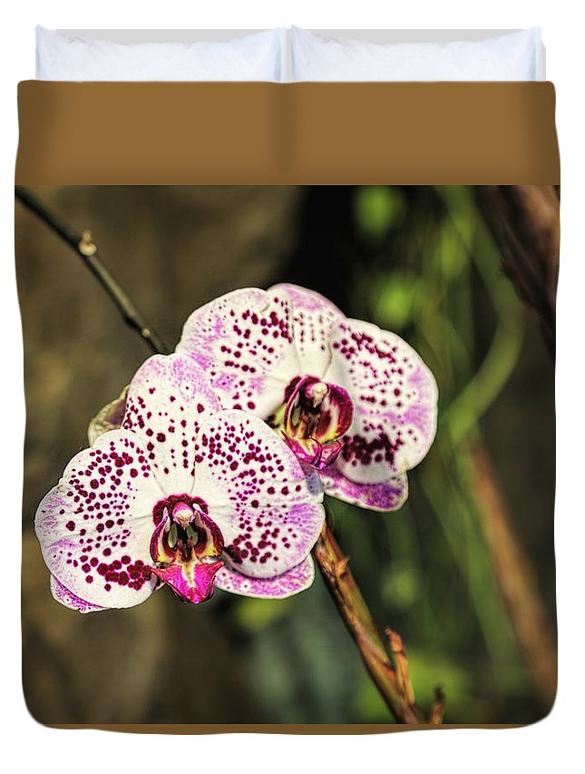 Orchid Duvet Cover featuring the photograph Speckled Orchids by Lorraine Baum