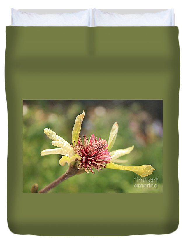 Tulip Tree Duvet Cover featuring the photograph Spent Tulip Tree Blossom by Carol Groenen