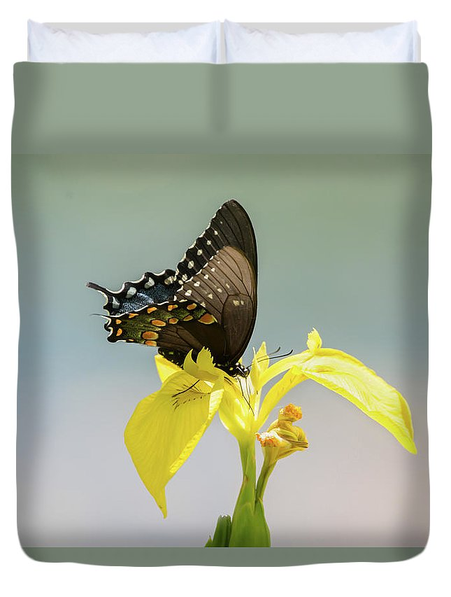 Butterfly Duvet Cover featuring the photograph Spicebush Swallowtail by Judy Tomlinson