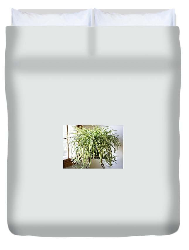 Spider Plant Duvet Cover featuring the photograph Spider Plant by Marilyn Hunt