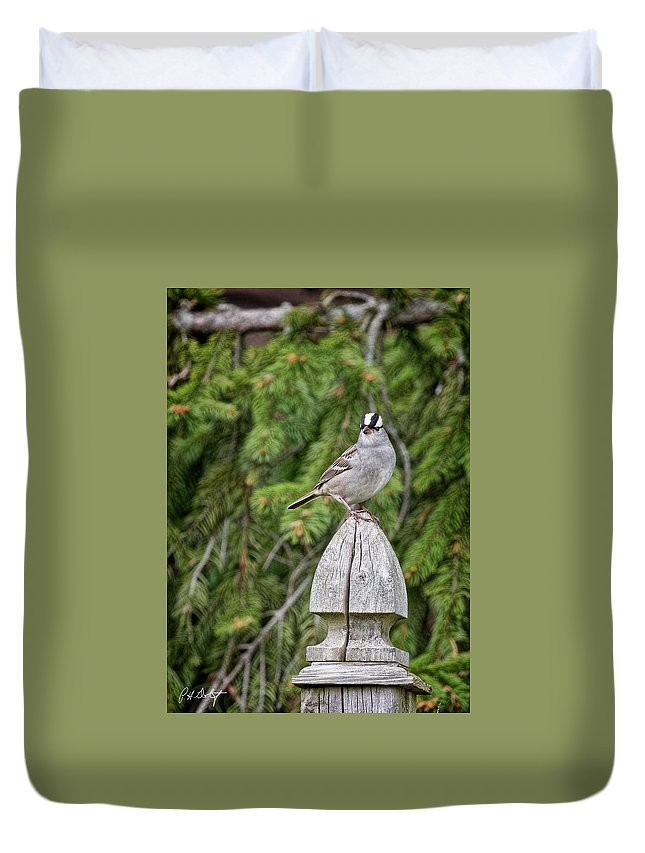 Backyard Duvet Cover featuring the photograph Spiffy Sparrow by Phill Doherty