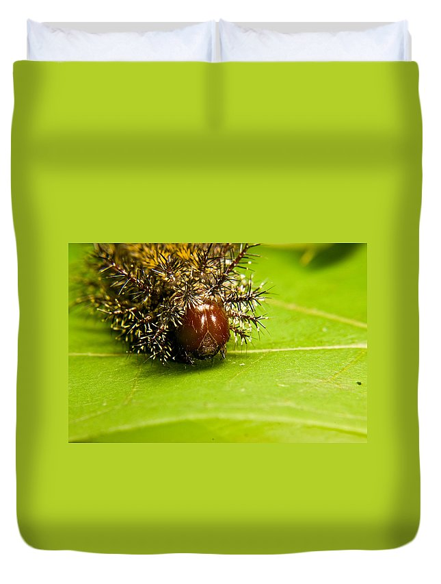 Spiny Duvet Cover featuring the photograph Spiny Larvae by Douglas Barnett