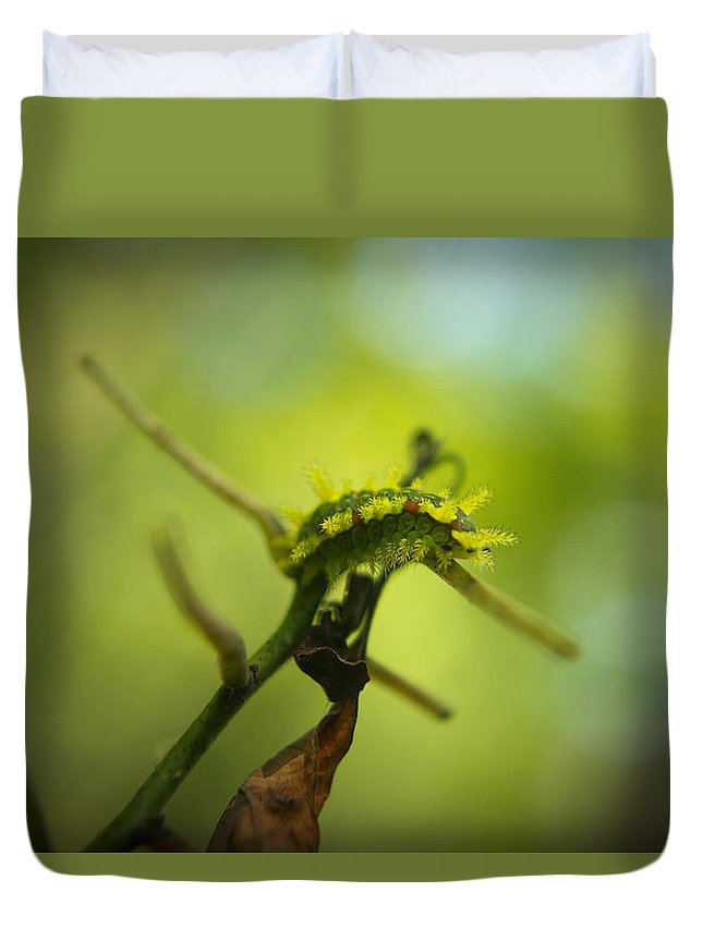Cove Duvet Cover featuring the photograph Spiny Oak Slug Moth 1 by Douglas Barnett