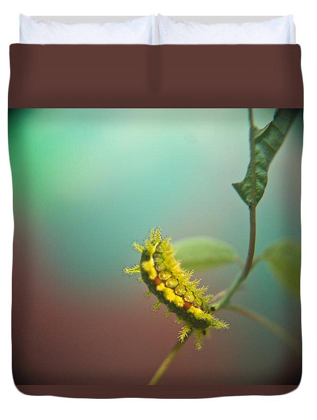 Duvet Cover featuring the photograph Spiny Oak Slug Moth 5 by Douglas Barnett