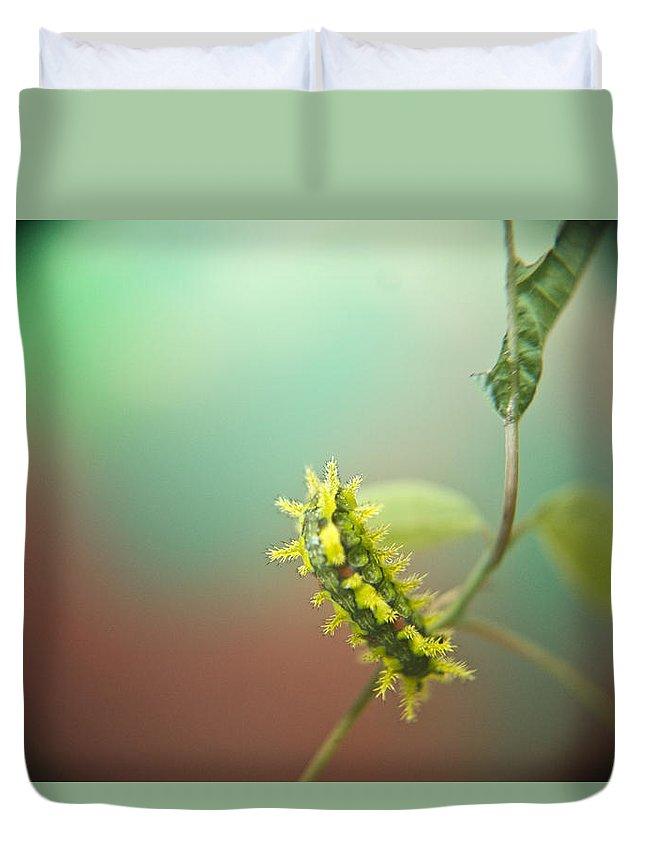 Cove Duvet Cover featuring the photograph Spiny Oak Slug Moth 6 by Douglas Barnett