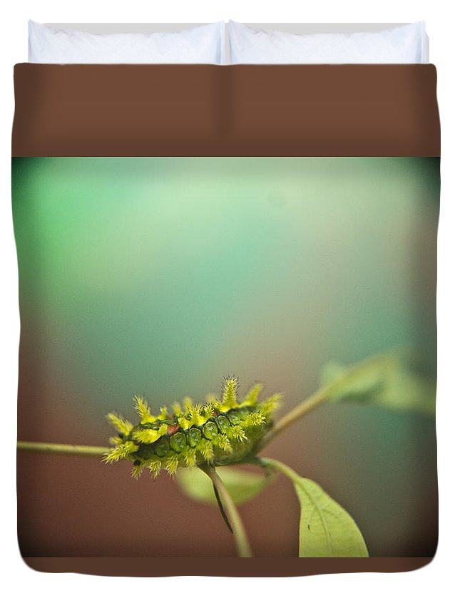 Cove Duvet Cover featuring the photograph Spiny Oak Slug Moth 8 by Douglas Barnett