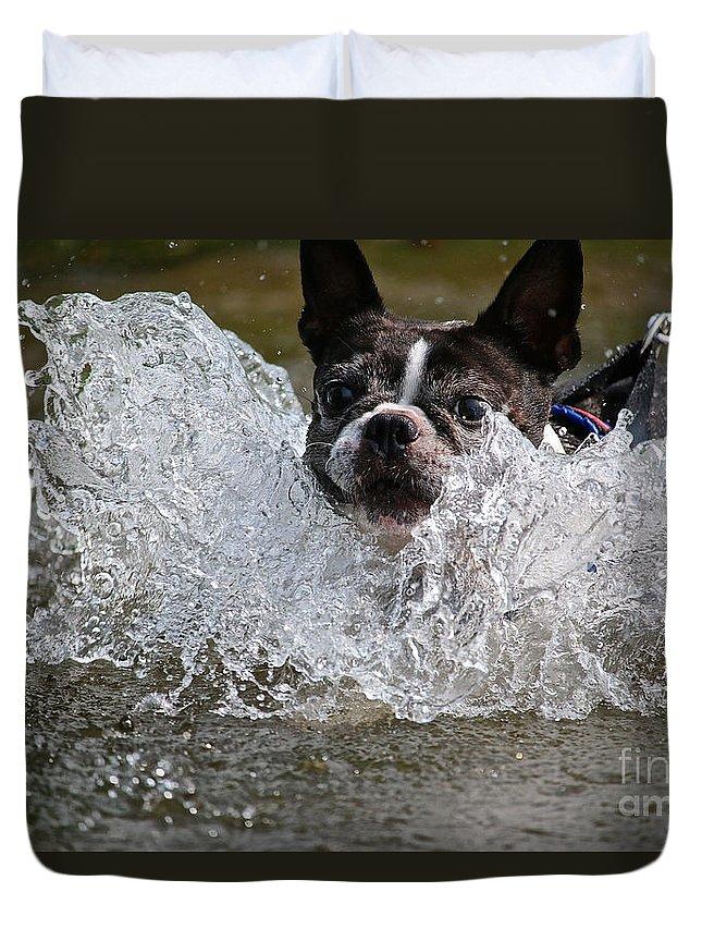 Boston Terrier Duvet Cover featuring the photograph Splashdown by Susan Herber