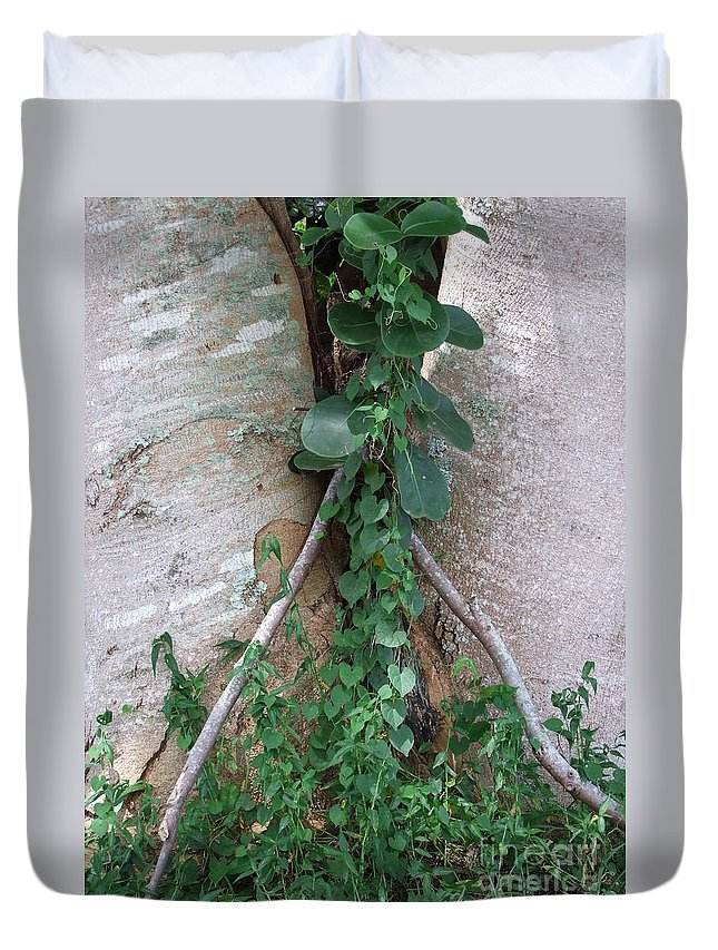 Green Duvet Cover featuring the photograph Split Tree by Mary Deal