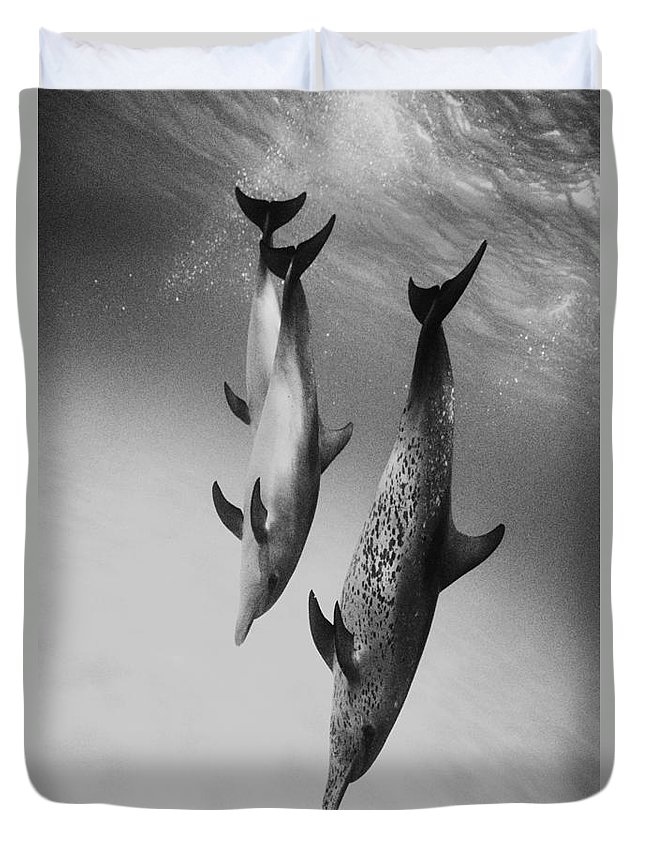 Animal Art Duvet Cover featuring the photograph Spotted Dolphins - Bw by Ed Robinson - Printscapes