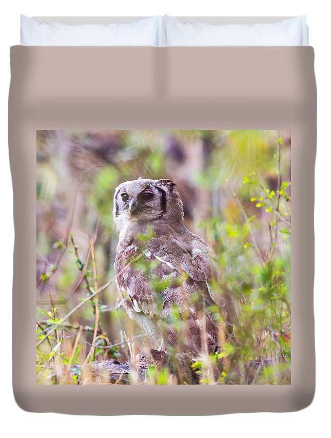 Spotted Eagle Owl Duvet Cover featuring the photograph Spotted Eagle Owl by Dave Whited