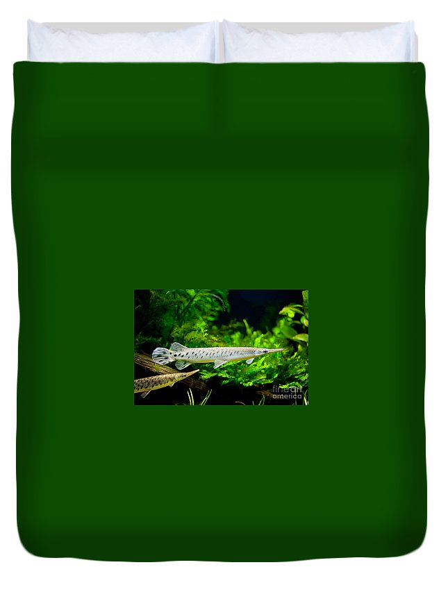 Zoo Duvet Cover featuring the photograph Spotted Gar Aquarium Fishes Pair by Arletta Cwalina