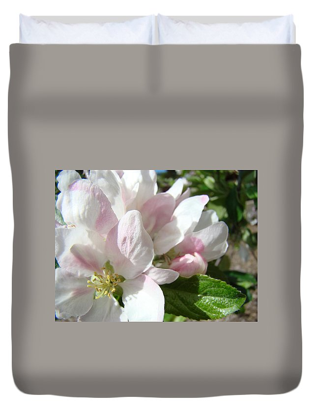Apple Duvet Cover featuring the photograph Spring Apple Blossoms Art Prints Apple Tree Baslee Troutman by Baslee Troutman