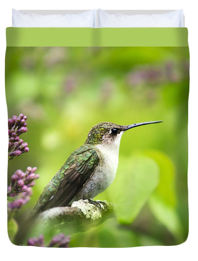 Bird Duvet Cover featuring the photograph Spring Beauty Hummingbird Square by Christina Rollo