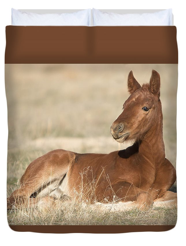Horse Duvet Cover featuring the photograph Spring Colt by Kent Keller