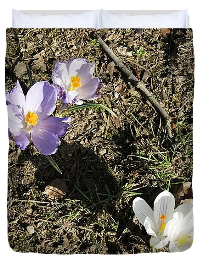 Spring Crocus Duvet Cover featuring the photograph Spring Crocus by LDS Dya