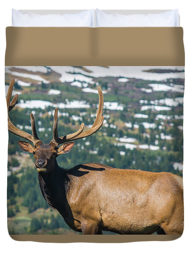Animal Duvet Cover featuring the photograph Spring Elk by Rob Lantz