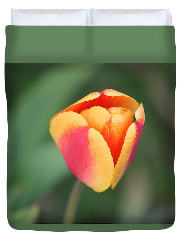 Tulip Duvet Cover featuring the photograph Spring Flowers by Gralyn Haller
