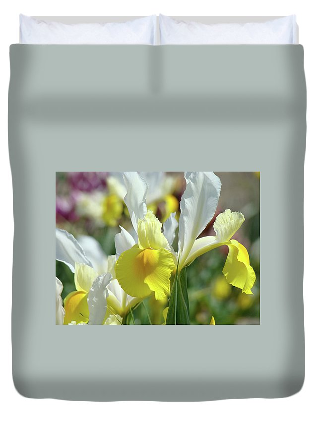 Iris Duvet Cover featuring the photograph Spring Irises Flowers Art Prints Canvas Yellow White Iris Flowers by Baslee Troutman