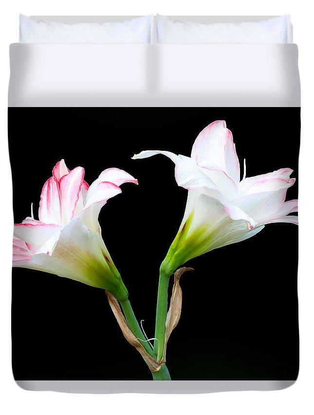 Easter Lilies Duvet Cover featuring the photograph Spring Lilies by Ram Vasudev