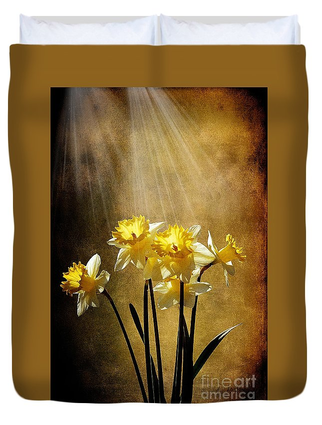 Daffodils Duvet Cover featuring the photograph Spring Sun by Lois Bryan