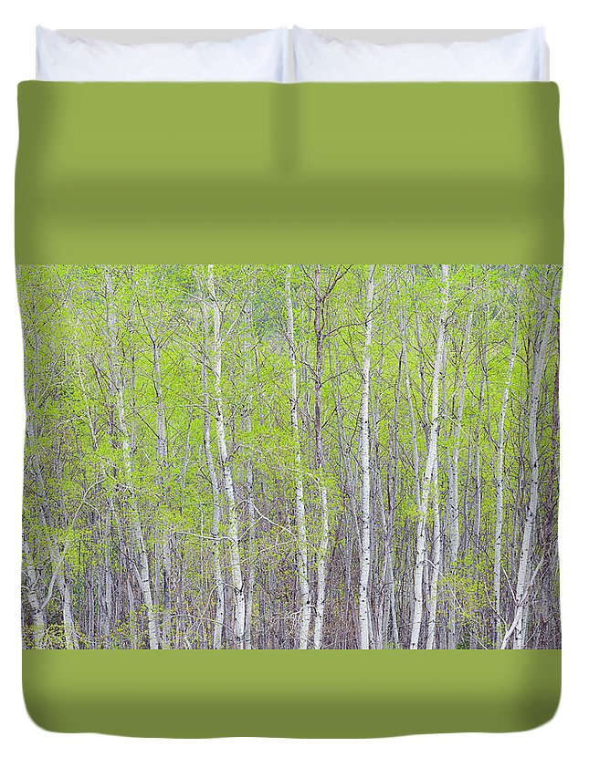 Spring Duvet Cover featuring the photograph Spring Woods by Alan L Graham