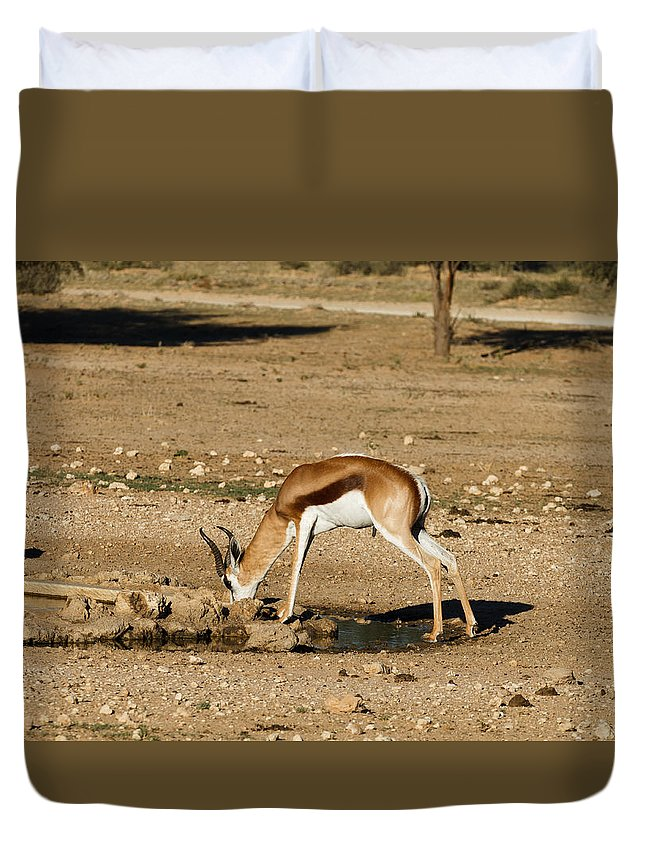 Kgalagadi Duvet Cover featuring the photograph Springbok by Davide Guidolin