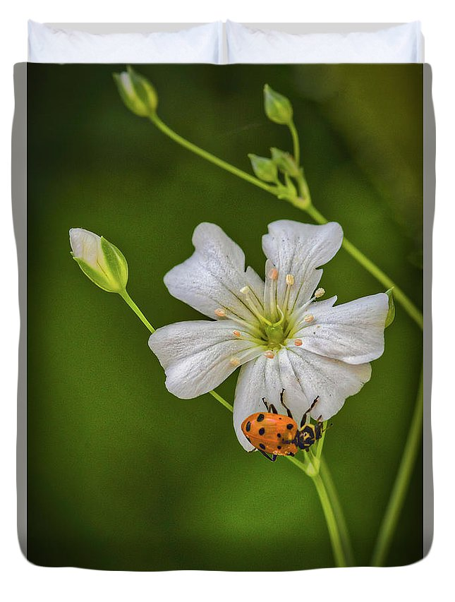 Springtime Ladybug Duvet Cover featuring the photograph Springtime Ladybug by Mitch Shindelbower