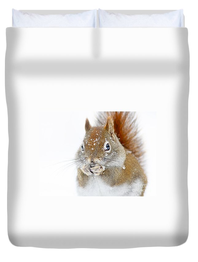 Animal Duvet Cover featuring the photograph Squirel Portrait by Mircea Costina Photography
