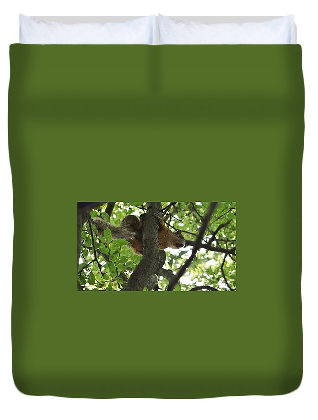 Squirrel Duvet Cover featuring the photograph Squirrel by Deb Rassel