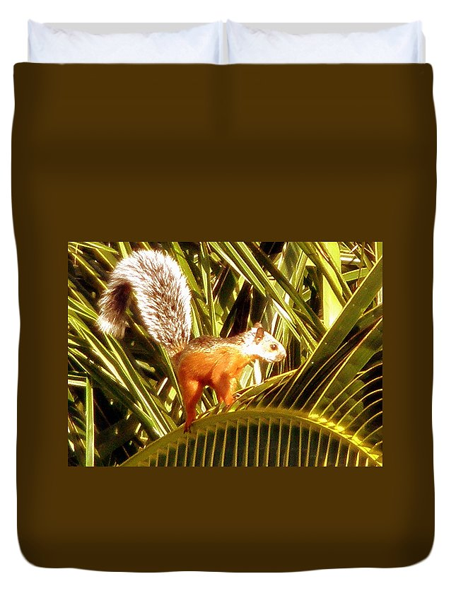 Squirrel Duvet Cover featuring the photograph Squirrel In Palm Tree by Glenn Aker