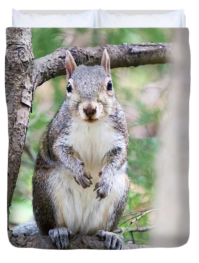 Squirrel Duvet Cover featuring the photograph Squirrel Looking At Photographer And Waiting To Be Fed by Alex Grichenko