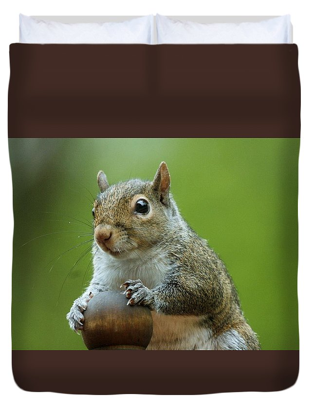 Nature Duvet Cover featuring the photograph Squirrel Portrait by Gina Fitzhugh
