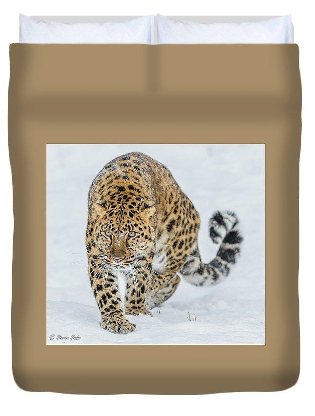 Leopard Duvet Cover featuring the photograph Stalker by Steven Szabo