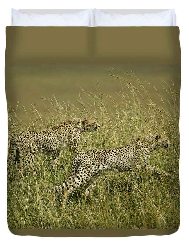 Africa Duvet Cover featuring the photograph Stalking Cheetahs by Michele Burgess