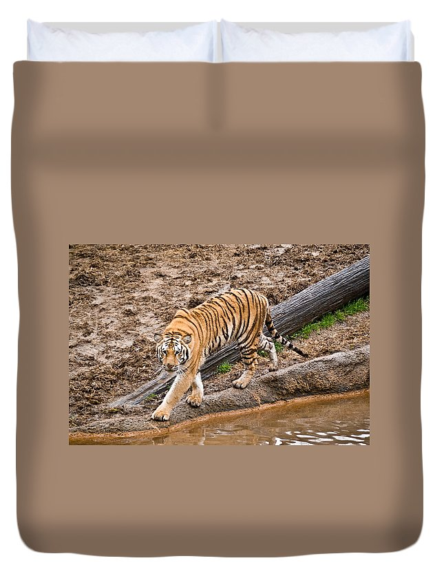Tiger Duvet Cover featuring the photograph Stalking Tiger - Bengal by Douglas Barnett