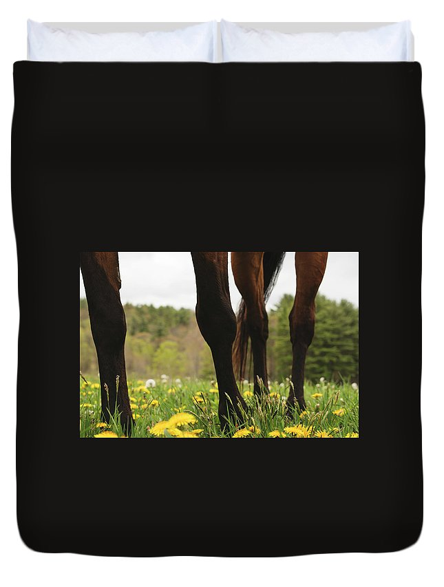 Horses Duvet Cover featuring the photograph Stand by H Roberts Photography