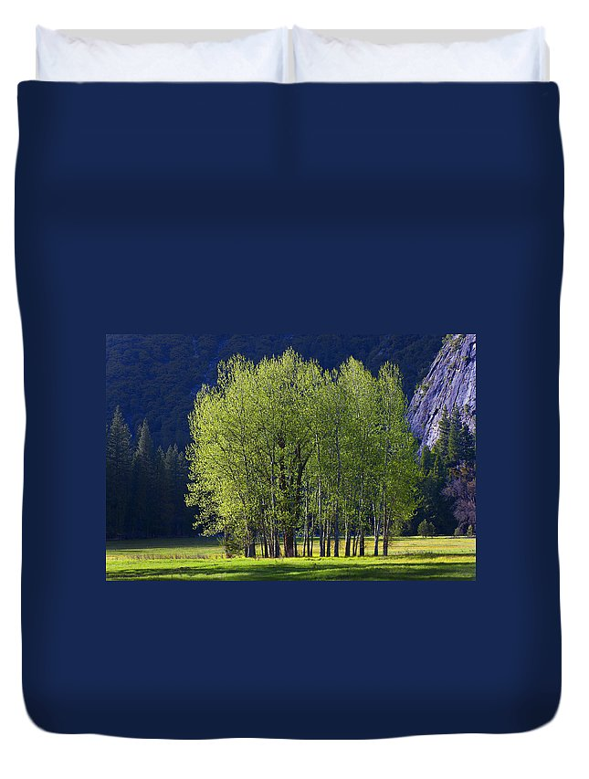 Trees Duvet Cover featuring the photograph Stand Of Trees Yosemite Valley by Garry Gay