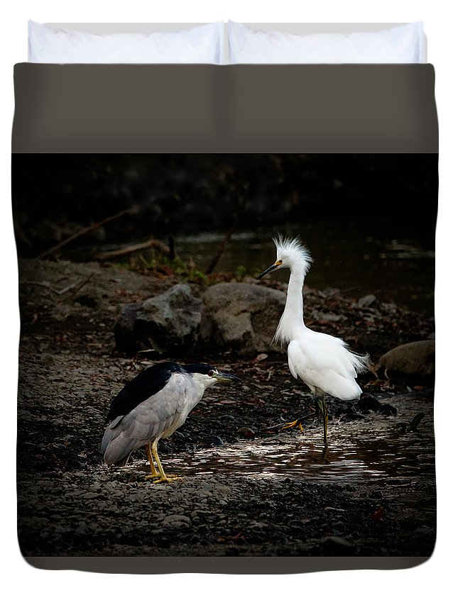 Egrets Duvet Cover featuring the photograph Stand Off by Elizabeth Waitinas