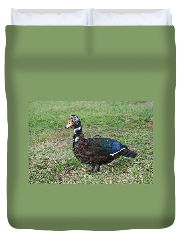 Ducks Duvet Cover featuring the photograph Standing Duck by Rob Hans