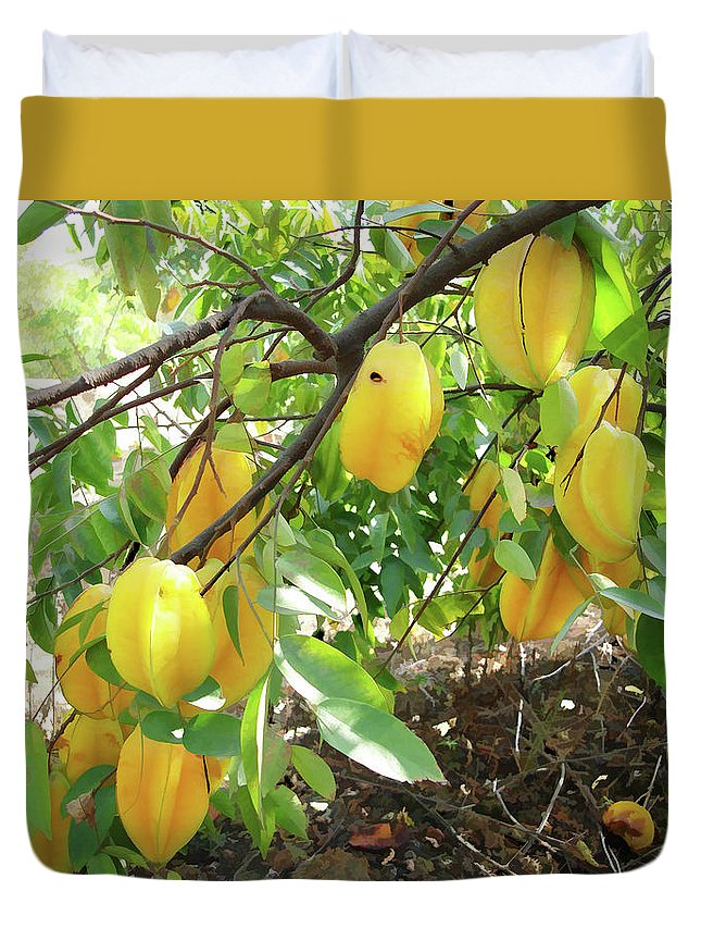 Star Apple Fruit On The Tree Duvet Cover featuring the painting Star Fruit Belongs To The Plant Family by Jeelan Clark