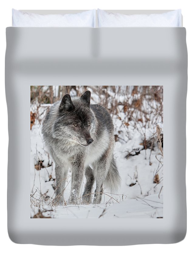 Wild Duvet Cover featuring the photograph Staredown by Colette Panaioti