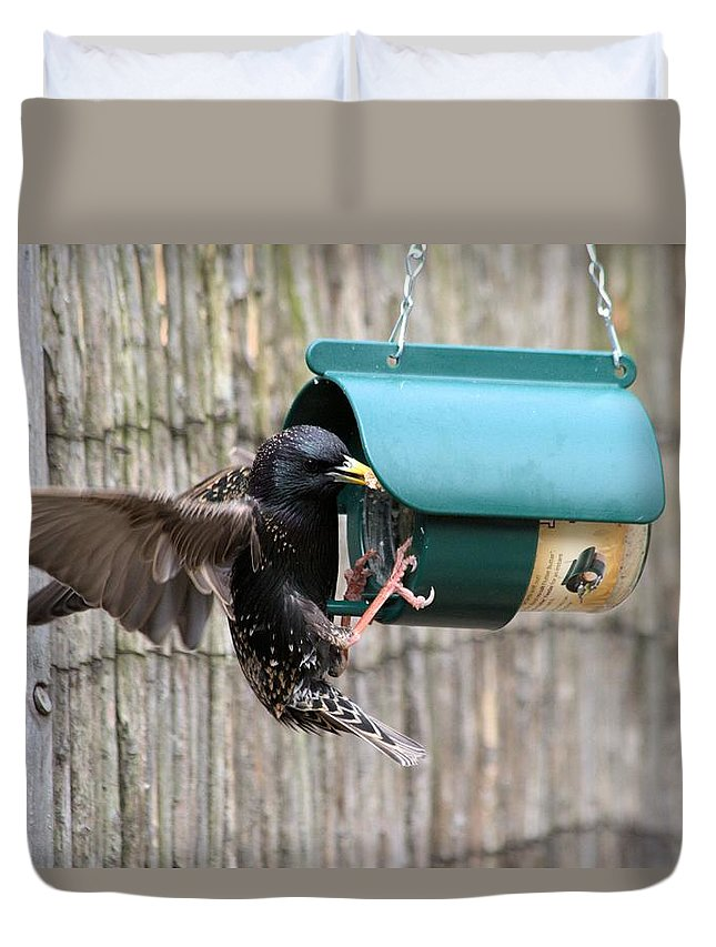 Starling On Bird Feeder Duvet Cover featuring the photograph Starling On Bird Feeder by Gordon Auld