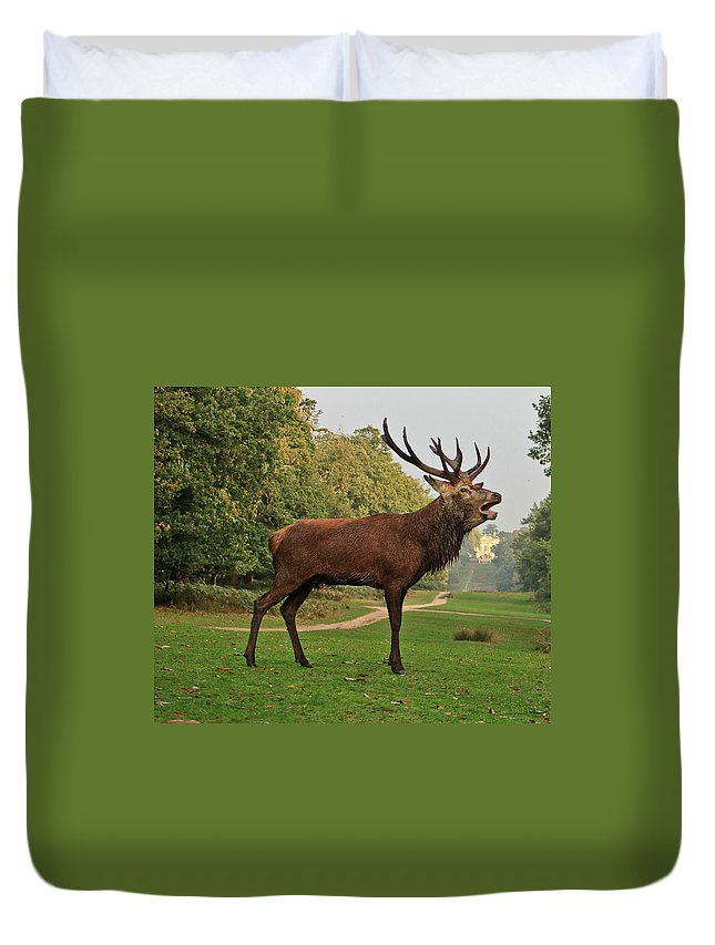 Deer Duvet Cover featuring the photograph Stately Stag by Dawn OConnor