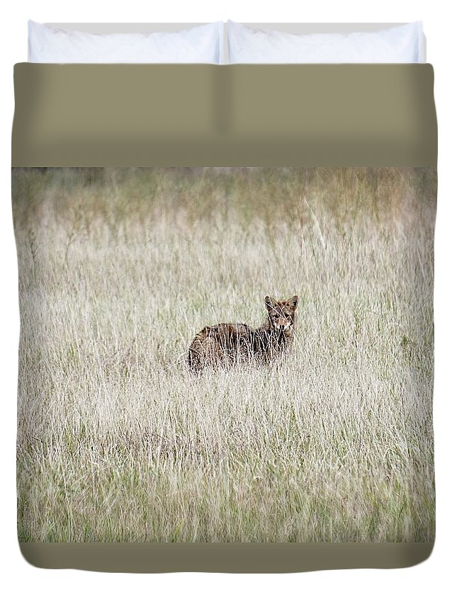 Coyote Duvet Cover featuring the photograph Steel Eyes by Chris Fleming