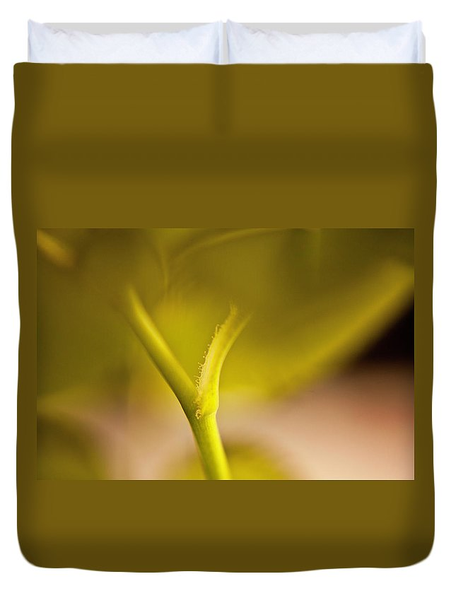 Rose Duvet Cover featuring the photograph Stem Of A Rose by Danielle Silveira