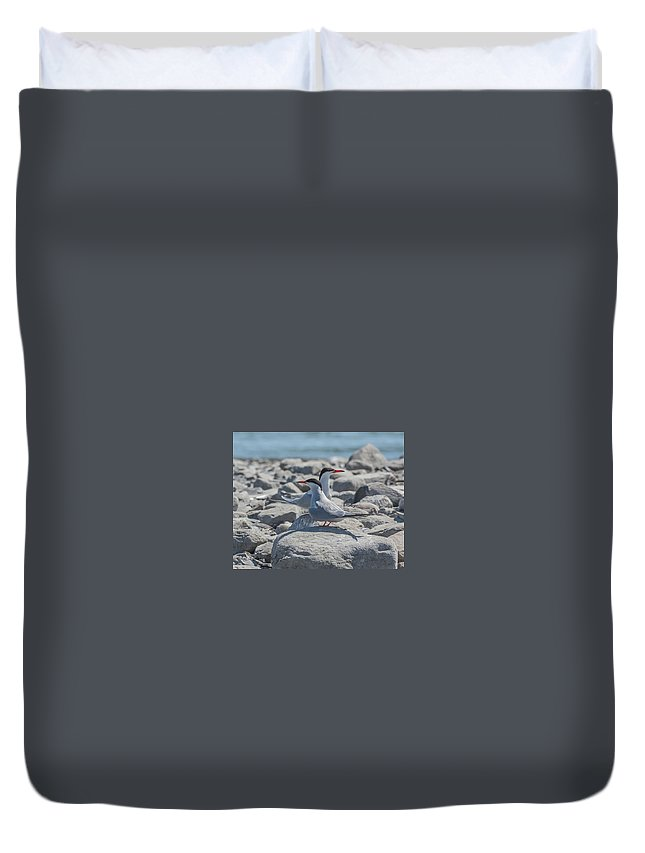 Sterne Royale Promotions For Sale Canadian Geography Art For Sale Nature Wildlife Canada Duvet Cover featuring the photograph Sterne by Gina Levesque